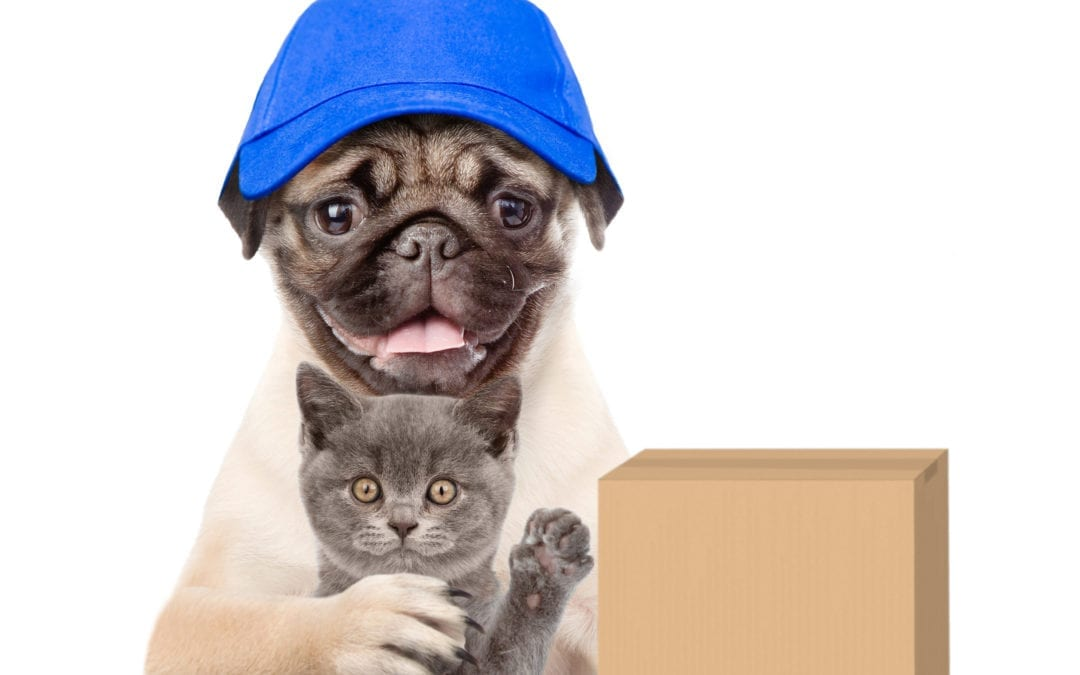 Moving with Pets: How to Make It Comfortable for Them Too