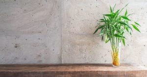 Moving Your House Plants to Your New Home