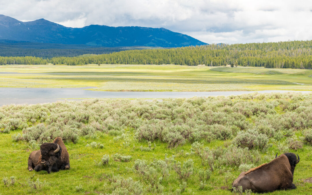 Bozeman to Yellowstone Winter Road Trip Itinerary
